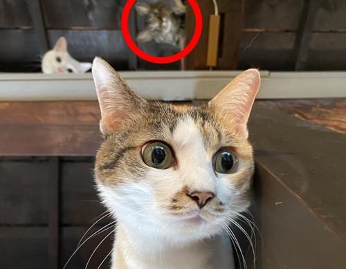 猫の背後霊写真3