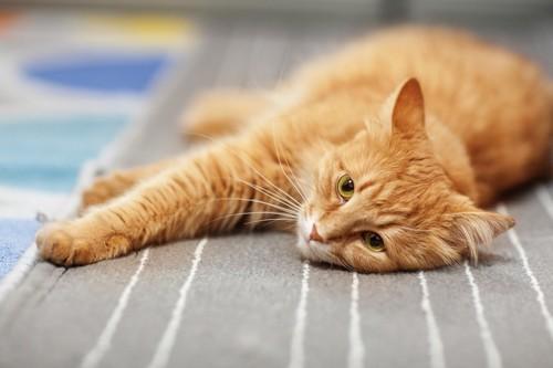 マットの上で寝転ぶ猫