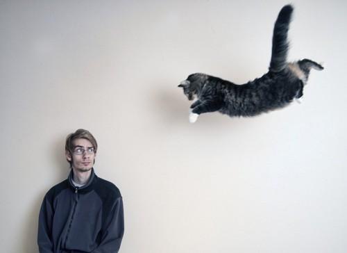飛ぶ猫と男性