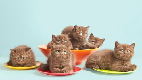 お皿の上に乗る子猫たち