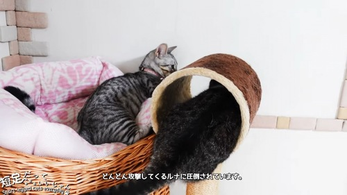 トンネルの中にいる黒系の猫