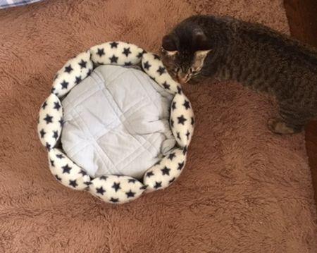 丸ベッドの横に猫がいる