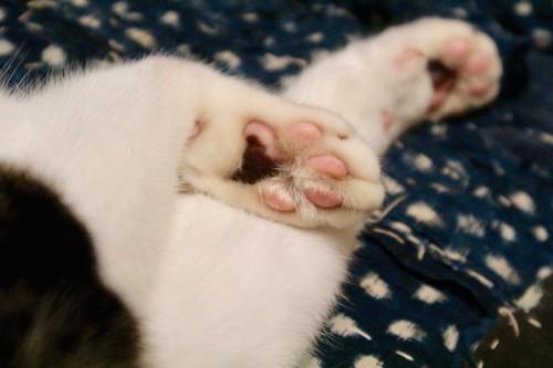 猫の肉球アップ