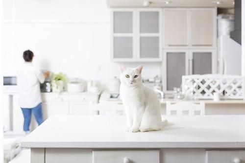 テーブルの上に白猫