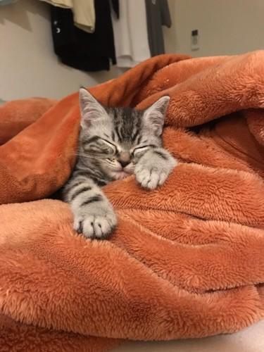 毛布にくるまって寝る子猫