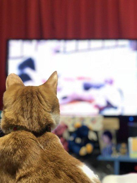 座ってテレビを見ている猫の後ろ姿