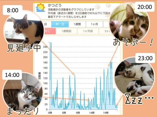 猫の活動グラフ