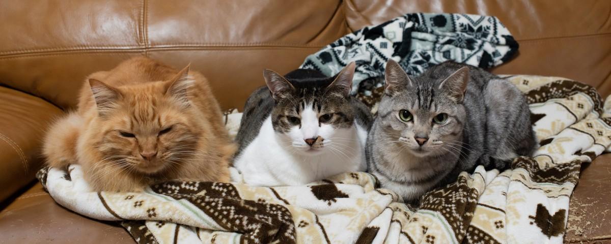 三匹の柄の異なる猫
