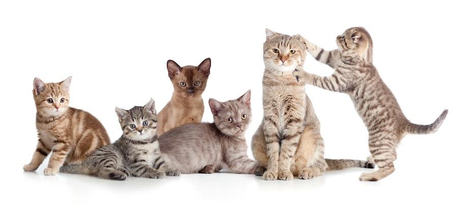 母猫とたくさんの子猫たち