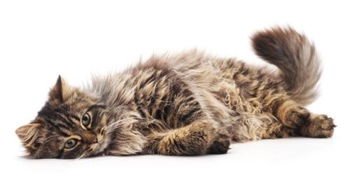 イライラ中の猫
