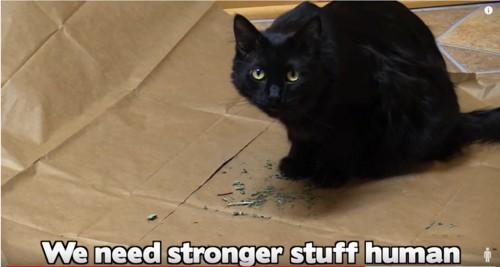 紙の上に座る黒猫