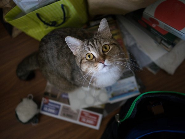 散らかった部屋に猫
