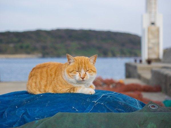 港で眠る茶色の猫