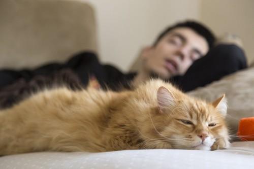 眠る男性と退屈な猫