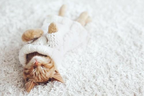 仰向けで寝るセーターを着た子猫