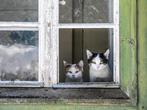 窓から外を見る二匹の猫