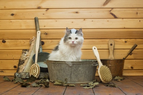 盥に入って座る猫