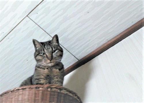 籠の中から下を見る猫