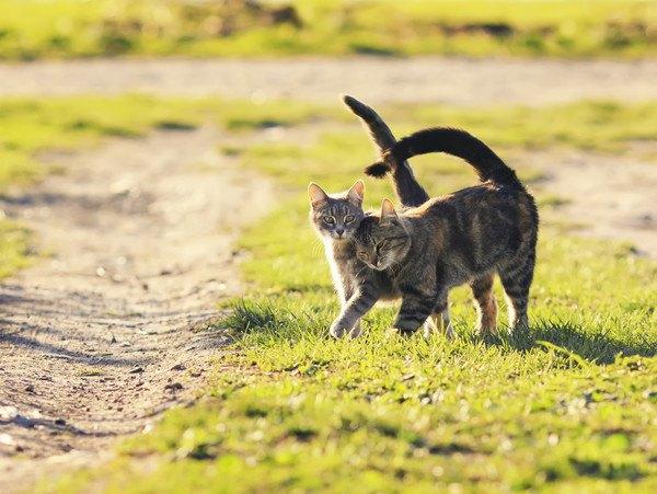 仲良く歩いている2匹の猫