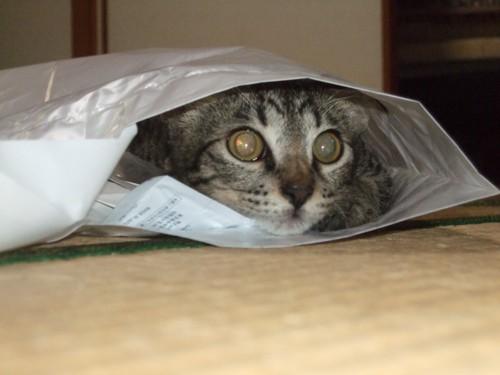 袋の中の子猫