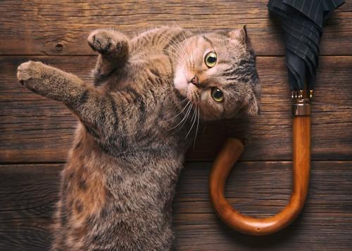 床に寝転んでいる猫の横に置かれた傘