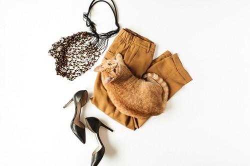 ボトムの上にいる猫とハイヒールとバッグ