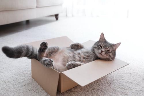 ダンボール箱の中に仰向けに寝転んでくつろいでいる猫