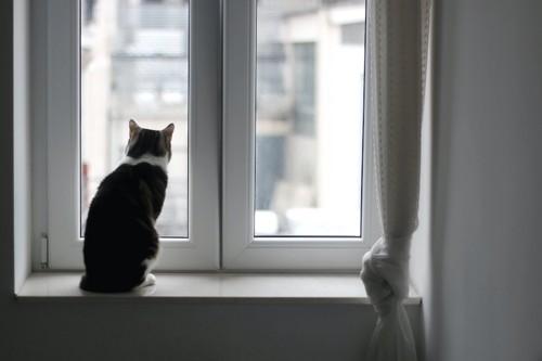 窓辺に座って外を見る猫の後ろ姿