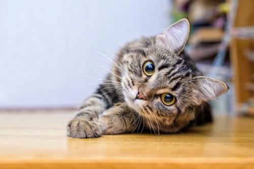 首をかしげてこちらをじっと見つめる猫
