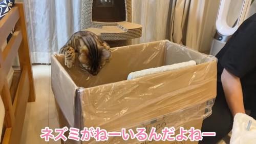 箱の中を覗く猫