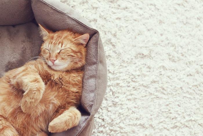 仰向けで眠っている猫