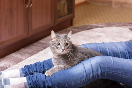カーペットの上に座る飼い主の足の間で休む猫