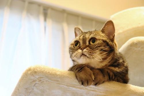 上の方を見る猫