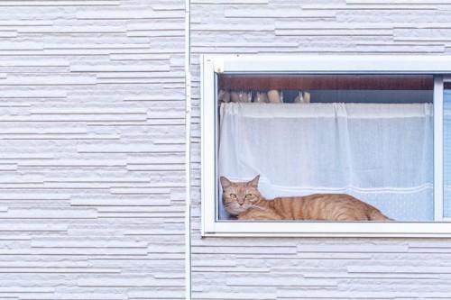 窓から外を見ている猫