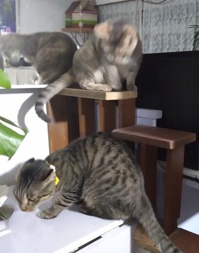 階段にのってる猫と通過する猫