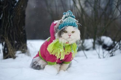 洋服を着た猫