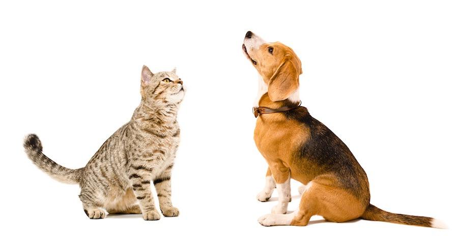 向かい合って座る猫と犬