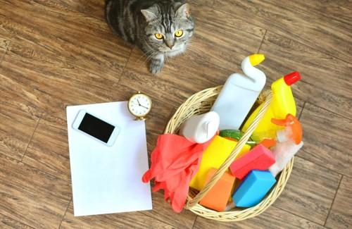 猫と掃除道具