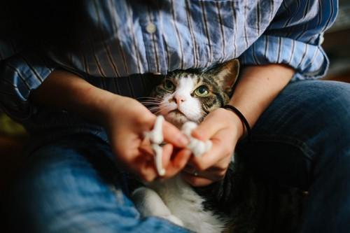 だっこされる猫