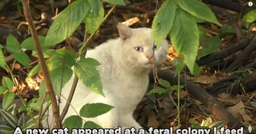 木陰に隠れる白猫