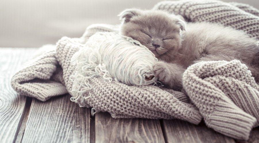 セーターと同化した猫