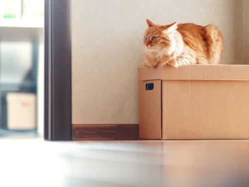 引っ越しした猫