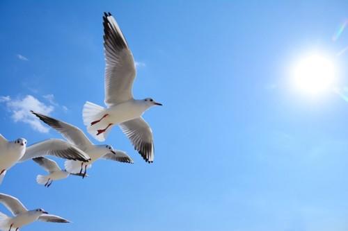 カモメの群が空を飛ぶ