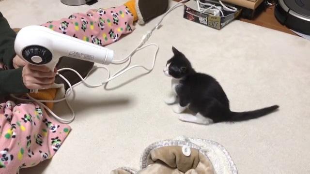 ドライヤーを見つめる猫