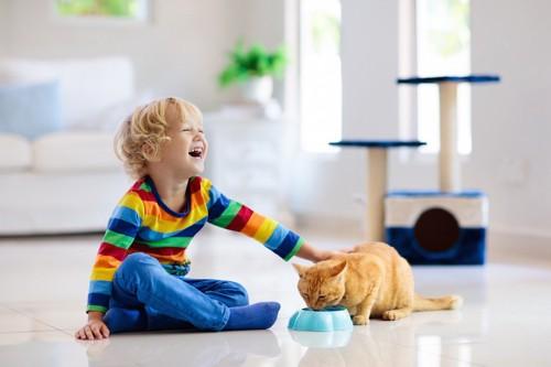 ご飯を食べる猫を笑顔で触る子供