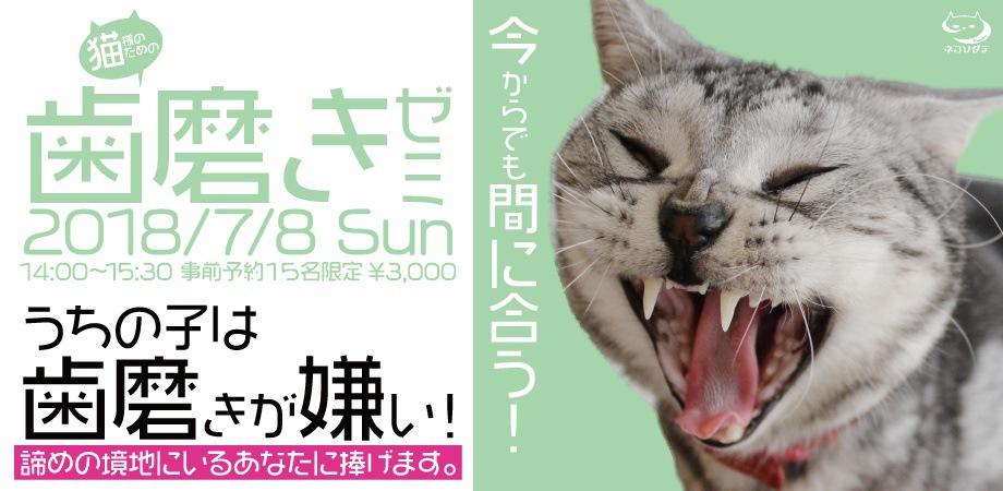 猫様のための歯磨きゼミの概要