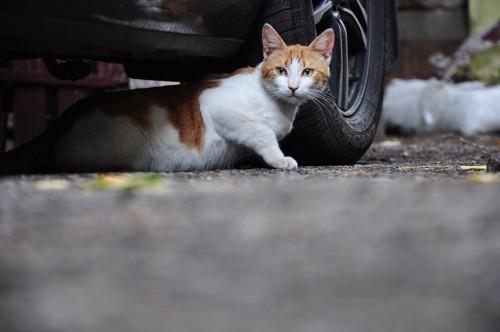 車の下から出る猫