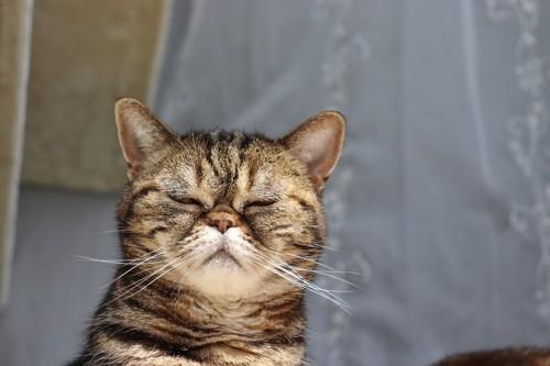 風を感じる猫