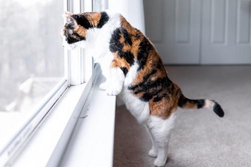 窓から眺める猫