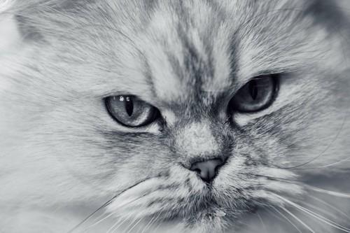 よだれを出す猫の顔アップ